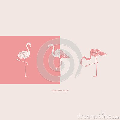 Free Flamingos Silhouettes. Vector Card. Cover Design. Vector Illustration. Royalty Free Stock Photo - 138991545
