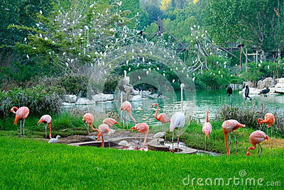 Flamingos and storks