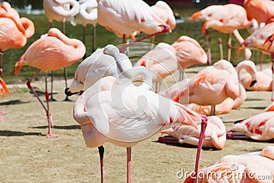 Flamingos in sunlight