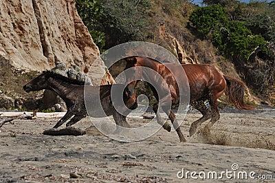 Flashy stallion