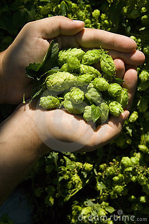 The flat hand with hop
