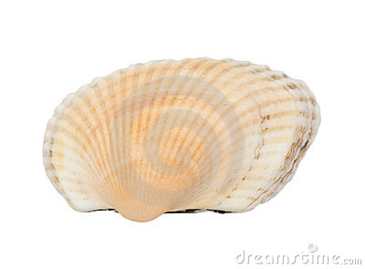 Flat orange shellfish