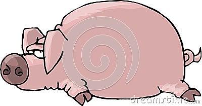 Flat Pig