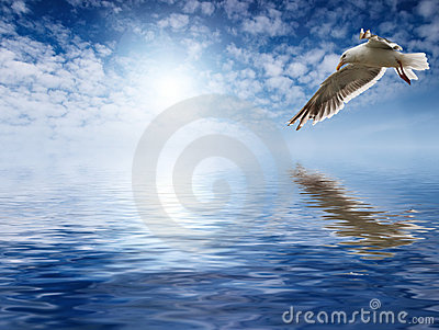 Flaying seagull