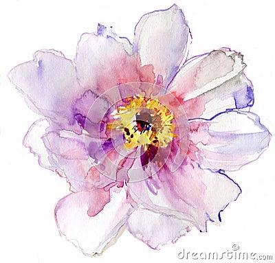 Fleur blanche d 39 aquarelle image stock image 31150611 for Aquarelle fleurs