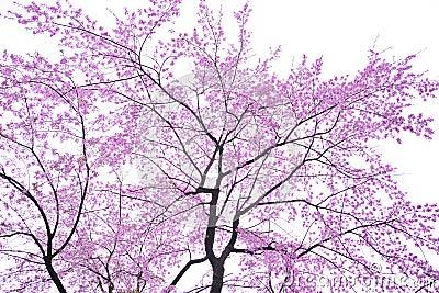 Fleur de cerise d art