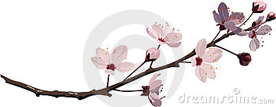 Fleur de cerise rose