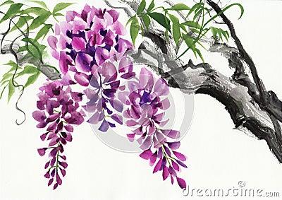 Fleur de glycine illustration stock image 56522336 for Glicine disegno
