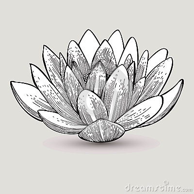 Fleur de n nuphar main dessin illustration de vecteur illustration de vecteur image 51792726 - Nenuphar dessin ...