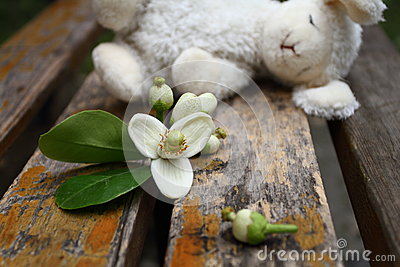 Fleur de pamplemousse avec un lapin de jouet de sommeil sur la chaise en bois
