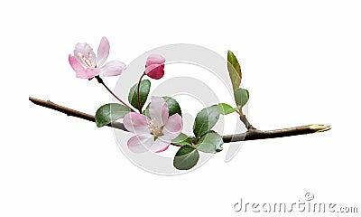 Fleur de plomb
