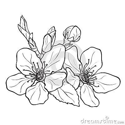 Illustration Stock Fleur Dessin De Fleurs De Cerisier Image50958029