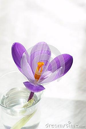 Fleur pure