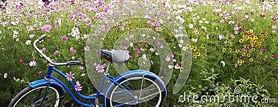 Fleurs bleues de champ de rose de bicyclette