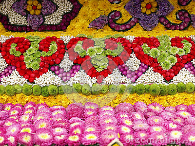 Fleurs colorées de fleur