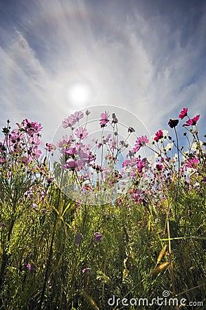 Fleurs dans Sun