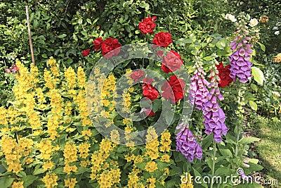 Fleurs dans un jardin anglais de pays photo stock image for Fleurs dans un jardin