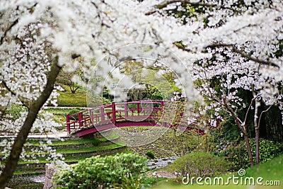 Fleurs de cerisier dans un jardin japonais photo stock for Fleurs dans un jardin