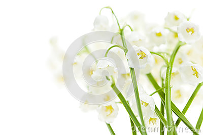 Fleurs du muguet sur le blanc