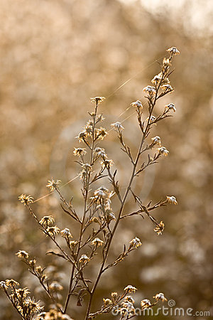 Fleurs sauvages et faune