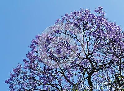 Fleurs violettes dans un arbre photos stock image 35440053 - Arbre fleur mauve printemps ...
