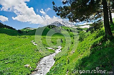 Horizontal d'été avec l'herbe verte, les montagnes et le fleuve
