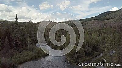 Fleuve de montagne L'eau de ruisseau rapide La Russie Altai banque de vidéos