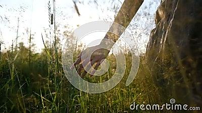 Flickan trycker på gräset med hennes hand i ultrarapid på solnedgångnärbilden i ett fält i sommar, kamerarörelse stock video