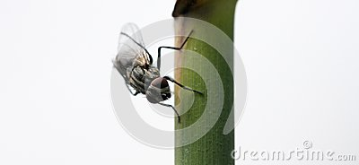 Fliege auf Stiel