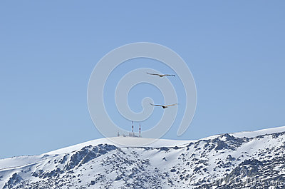 Flight of eagles with radio antenna and tv background