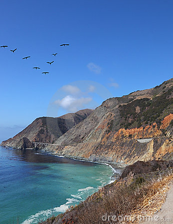 The flight of gray pelicans over azure water