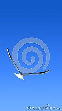 Free Flight. Smartphone Wallpaper Stock Image - 104768681