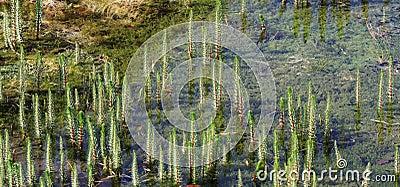 Float grass