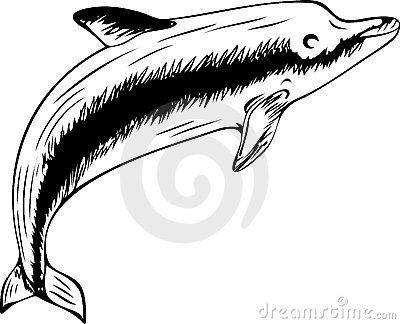 Floating dolphin (black-and-white illustration)