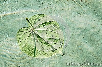 Floating leaf on a pristine sea