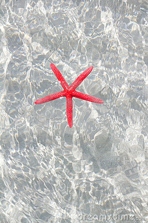Floating red starfish in white sand beach