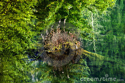 Floating Rock Green Tree Reflectioin Abstract
