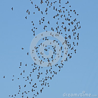 Flock of birds on blue sky