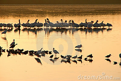 Flock of birds on lake