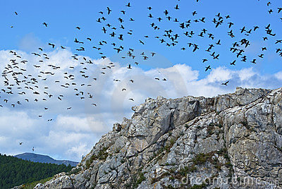 A flock of birds over the cliff