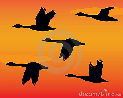 Flock of Geese Silhouettes