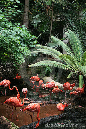 Free Flock Of Flamingos Royalty Free Stock Photos - 6077388