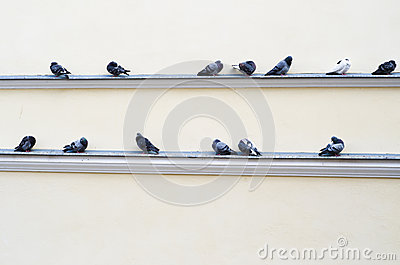 Flock of pigeons sitting on the ledge of the building