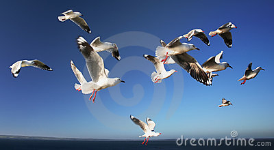 A Flock of Seagulls 2