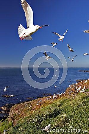A Flock of Seagulls on Coast