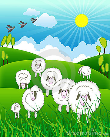 Flock of sheep in farm