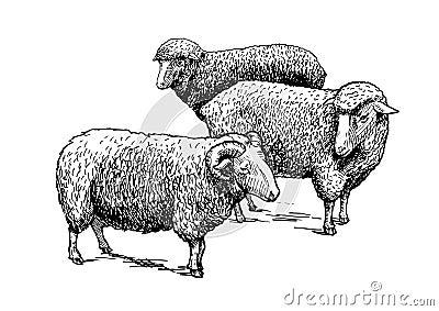 Flock of sheep Vector Illustration