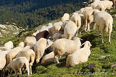 The Flock of Sheeps