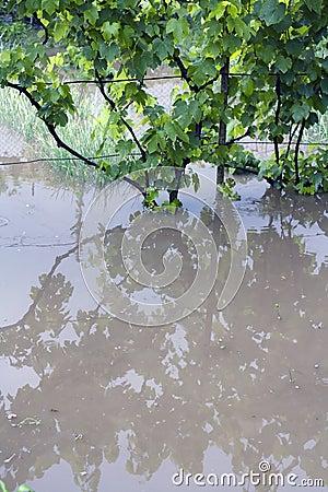 Flood garden
