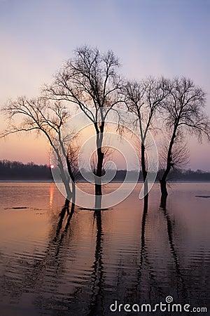 Flood tide trees